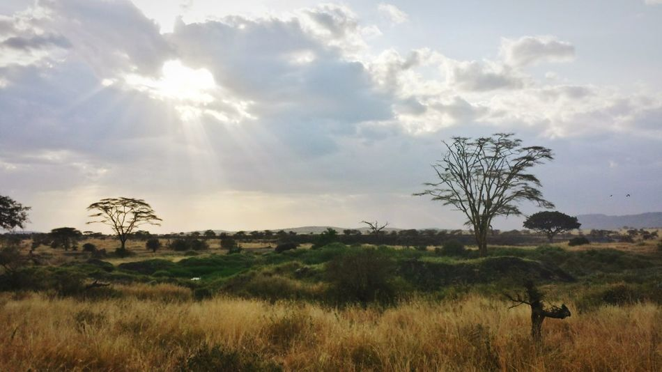 Manyara national park Tanzania, Africa Capture The Moment Nature EyeEm Nature Lover Enjoying Nature Safari Safari Park Trees And Sky Lone Tree Sun Light