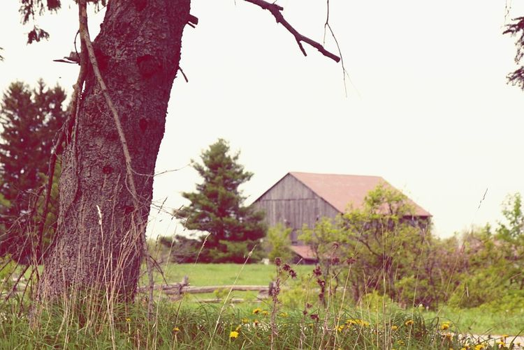 barn Caledon, Ontario Tree House Agriculture Rural Scene Outdoors No People Sky Built Structure Grass Nature Barn Landscape Day Building Exterior