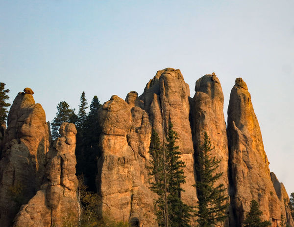 Morning light glow on The Needles rock formations in Custer State Park in South Dakota Custer State Park Morning Light Beauty In Nature Day Landscape Low Angle View Nature No People Outdoors Pinnacle Rock - Object Rock Formation Rock Hoodoo Sky Travel Destinations