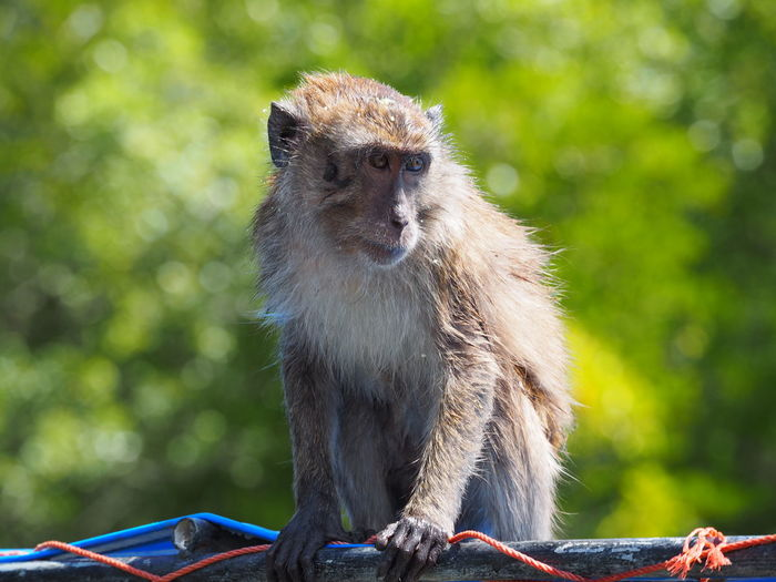 Monky Animal Themes Animal Wildlife Animals In The Wild Close-up Day Mammal Monkey Nature No People One Animal Outdoors