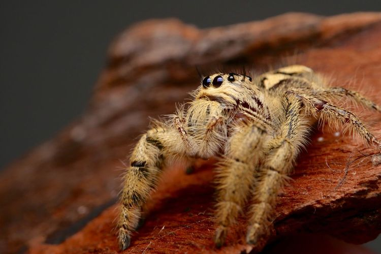 Spider Animals In The Wild Animal Wildlife Animal Themes Animal One Animal Close-up No People