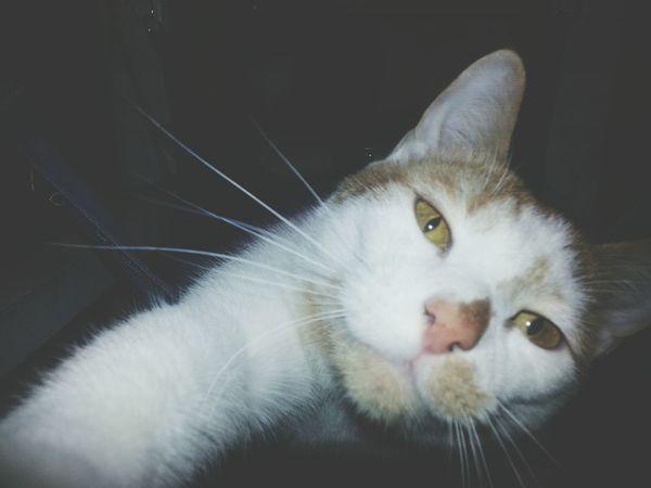 Cats Cat Cutepets Humanesociety
