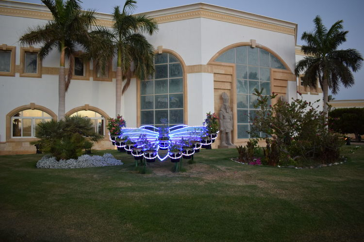 a butterfly-shaped jardineria (flower box) , Red sea , Egypt Jardineria Flower Box Butterfly-shaped Red Sea Egypt Palm Royal Hotel Hurghada Palm Tree Tree Plant Tropical Climate Building Exterior Grass Front Or Back Yard No People Outdoors Lawn Arch Luxury