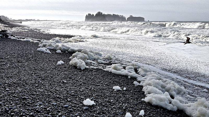 How Do You See Climate Change? Rialtobeach Seafoam Wild Nature Wild Coast Olympic National Park Seascape On The Beach