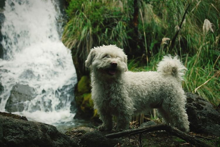 Portrait of dog looking at waterfall