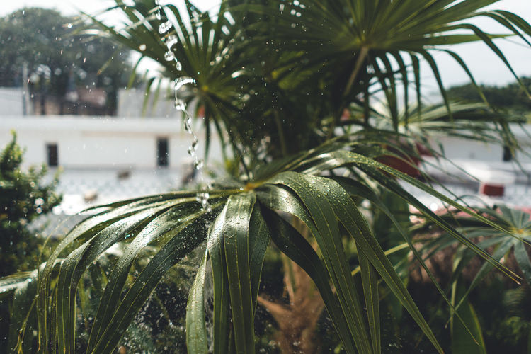 Plant Focus On Foreground Tree Growth Close-up Leaf Nature No People Green Color Day Plant Part Palm Tree Tropical Climate Drop Outdoors Water Wet Selective Focus Palm Leaf RainDrop
