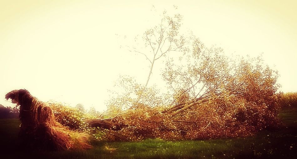 Baum, Tree, Natur, Storm, Wind, Dream Outdoors Day Grass Beauty In Nature Landscape Photo@ironrobot