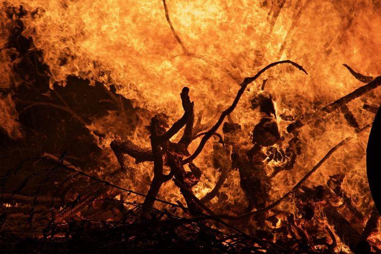 Woods burning at night
