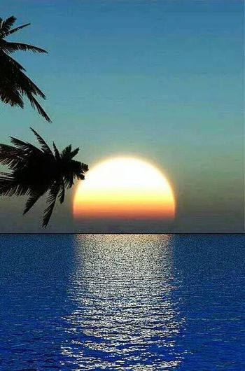 Sunset Sea Palm Tree Tranquility Horizon Over Water Water Reflection Idyllic Beach Tranquil Scene Sunlight Sky Relaxation Outdoors Multi Colored No People Tropical Climate Horizon Beauty Nature Hanging Out Check This Out Uff Close-up Uniqe