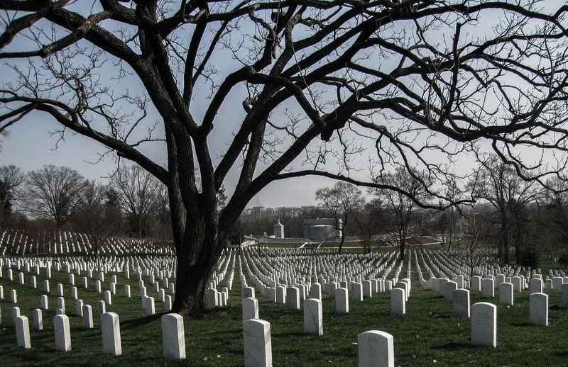 Bare trees in cemetery