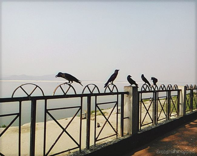 Check This Out Crows Crowstyle Waiting In Line Click Click 📷📷📷