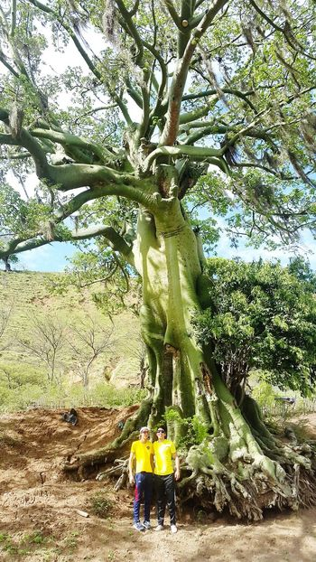 "Tree Big Tree! Very Big Tree Gigant Tree Ceibo Green Nature Nature_collection All You Need Is Ecuador Celica ""Ceibo"" tree."