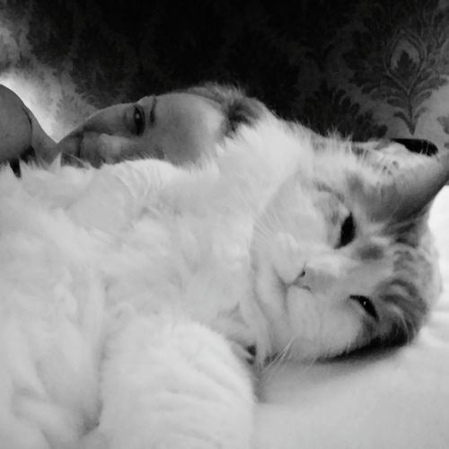 Lying Down Goodmorning Starting Over That's Me Good Times Norwegian Forestcat  My Love❤ Eyeem A Happy Woman Stillfocus Enjoying Life 15days Still Focusing Sobriety  This Is... Love Cat New Life Goodmorning :)