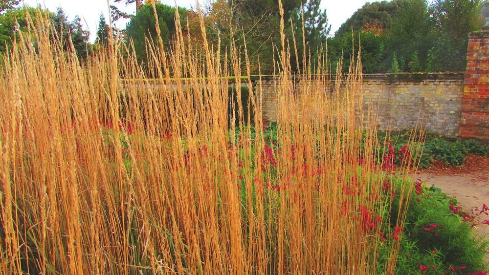 Growth Dayoutinthegarden Outdoors Day Multi Colored Autumn Wimpole Estate Wimpole Hall, Walled Garden National Trust 🇬🇧 October2017🍂🍁💛 October
