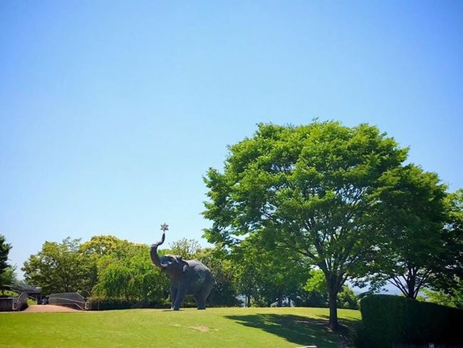Tree Elephant Elephant ♥ OITA ART MUSEUM Oita Oita-prefecture Oita,japan
