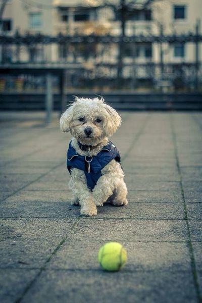 I Love My Dog Ich Liebe Mein Hund