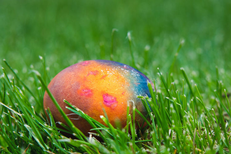 Close-up of multi colored eggs on field