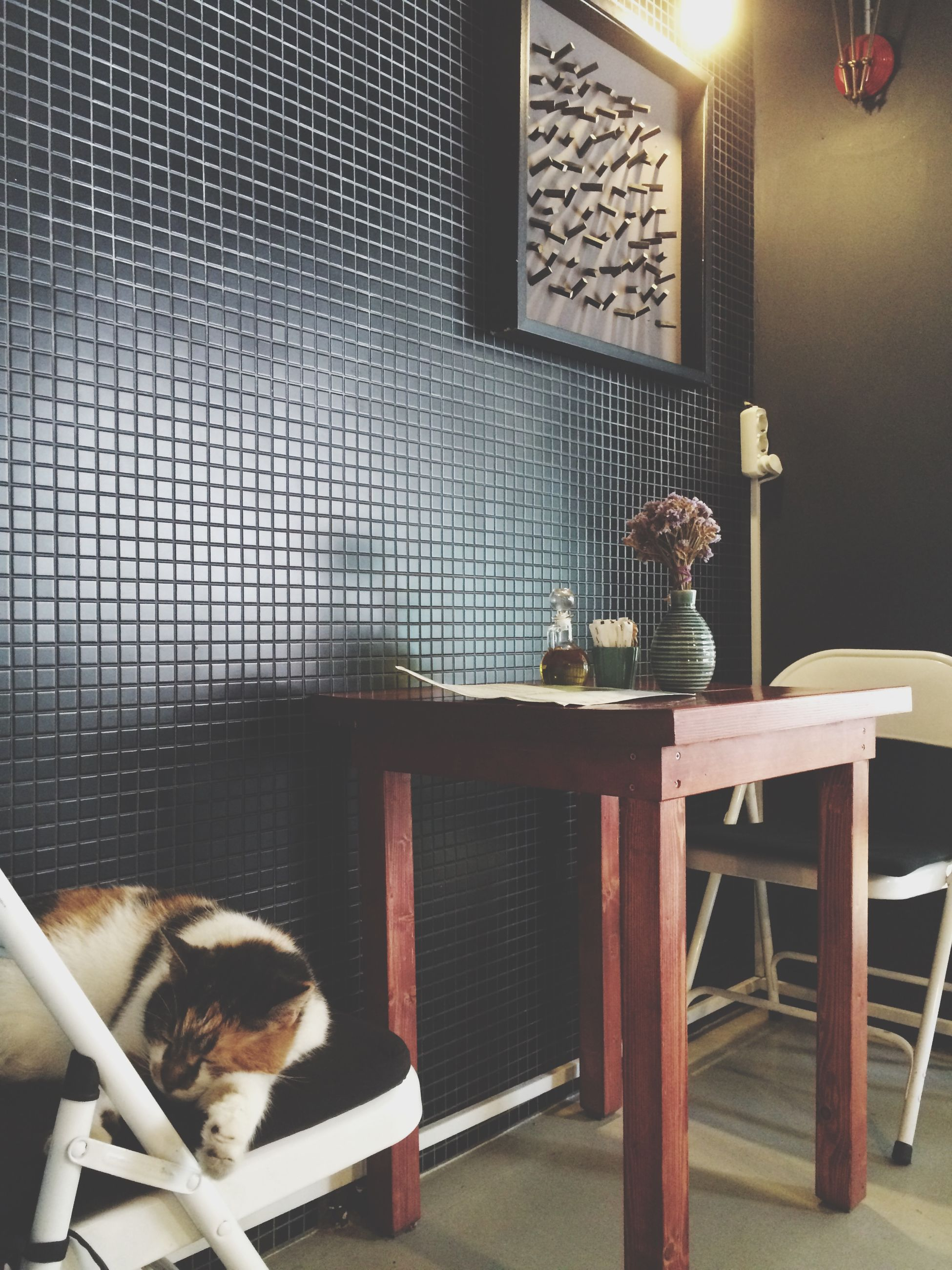 indoors, home interior, sitting, pets, chair, domestic animals, animal themes, mammal, window, one animal, relaxation, domestic room, technology, illuminated, home, no people, door, table, sofa, house