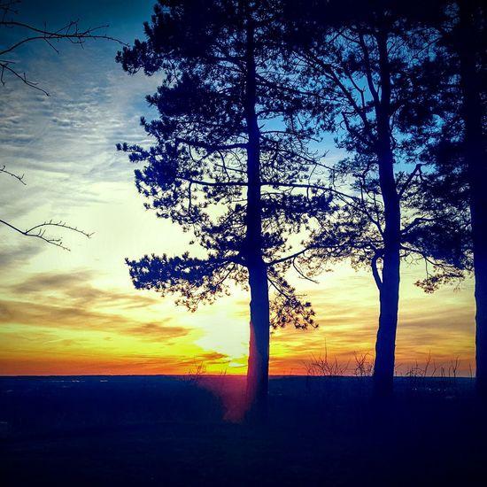 Sunset And Trees Minnesota True Beauty