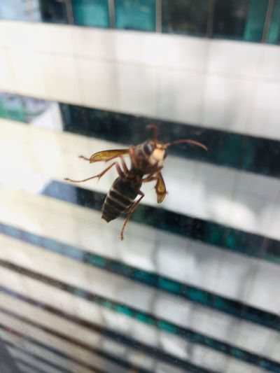 Close-up of bee on glass window