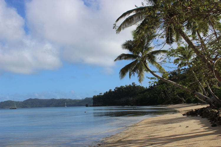Oysterreally Vanuabalavu Island Markneutsch Beach Beauty In Nature Day Nature No People Outdoors Palm Tree Sand Scenics Sea Sky Tranquil Scene Tranquility Tree Water Summer Exploratorium
