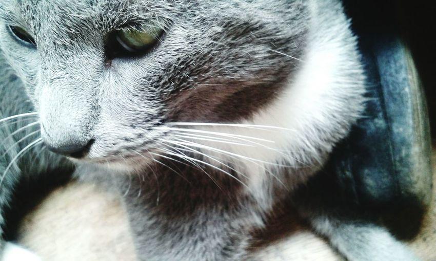 EyeEmNewHere Cat♥