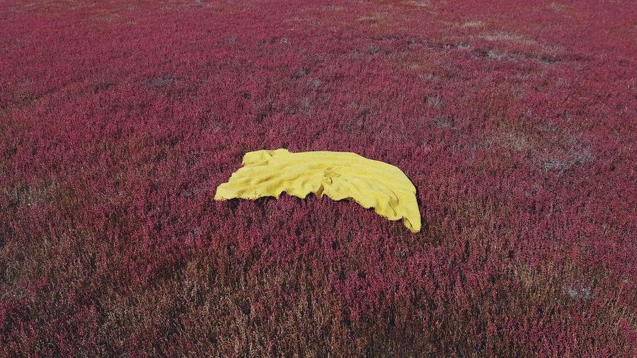 Blanket on levander field
