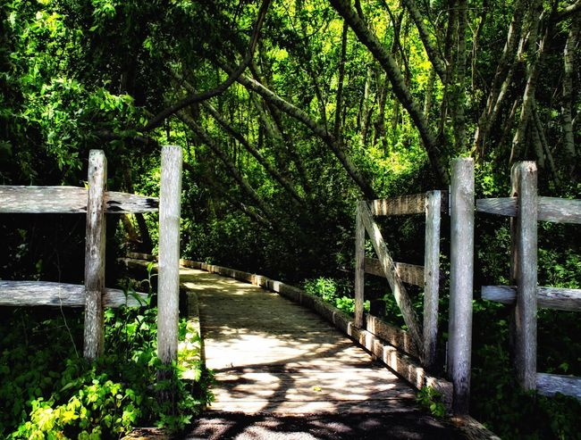 Tree Plant The Way Forward Nature Green Color Sunlight Growth Tranquility Protection Wood - Material Boundary Gate No People Direction Footpath Safety Security Barrier Day Fence