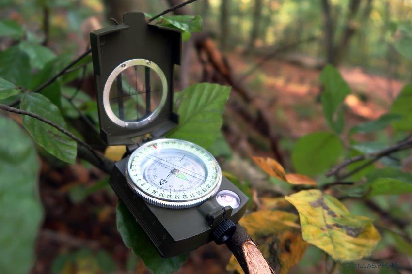 Kompass Navigation Tree Navigational Compass Leaf Time Antique Minute Hand Instrument Of Measurement Close-up Plant