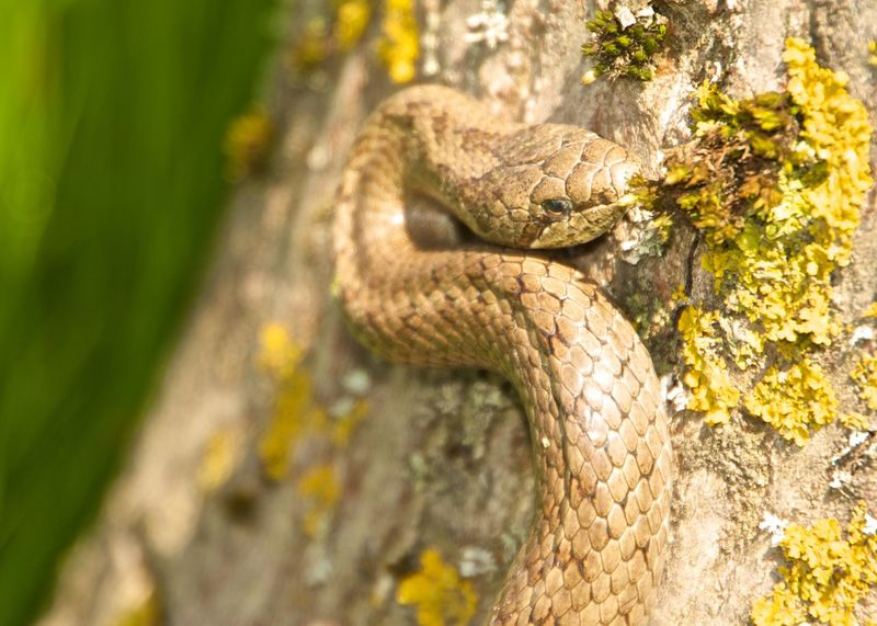 Snake Snake Animal Themes Animal Wildlife Animals In The Wild Close-up Danger Day Nature No People One Animal Outdoors Reptile