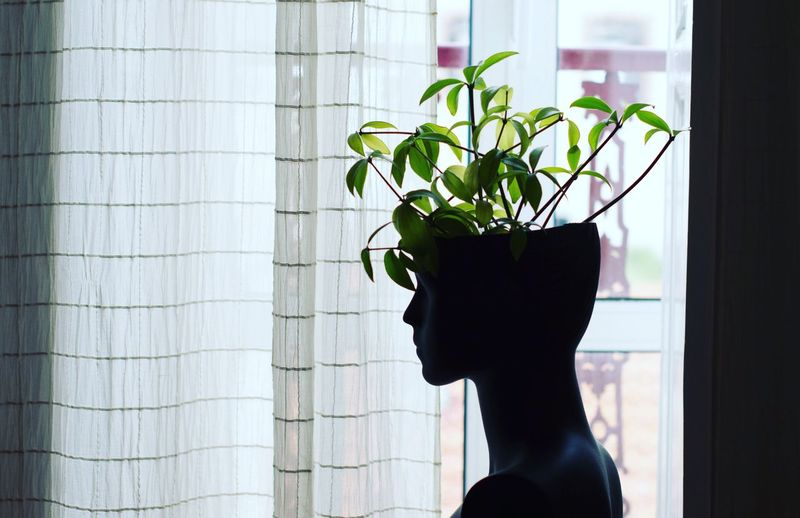 Plants growing in mannequin at home