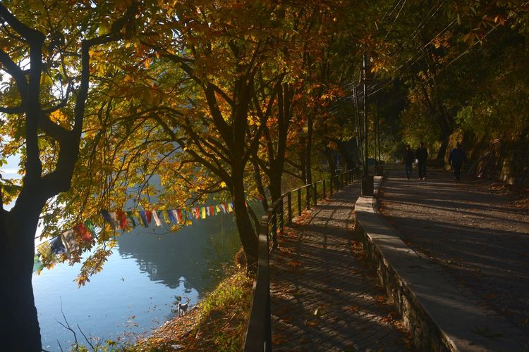 Footpath amidst trees by lake during autumn