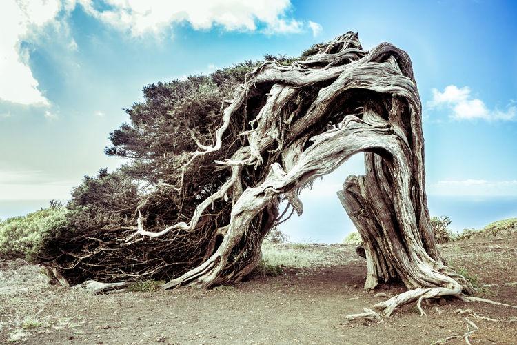 Trees on sand against sky