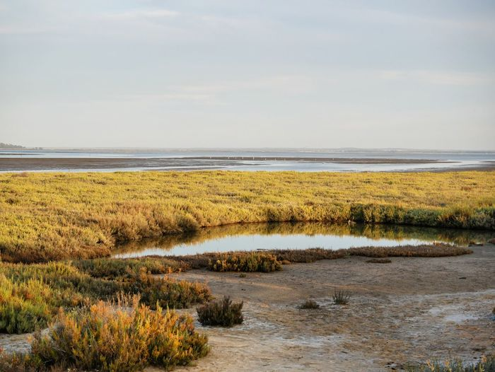 Water Sea Marsh