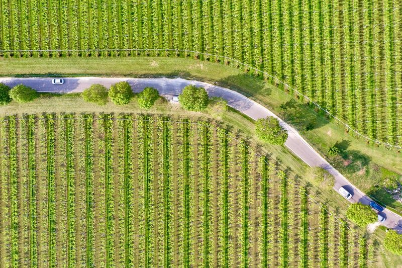 Italy, Verona: Valpolicella wineyards Drone  Green Color Agriculture Plant Land Nature No People Growth Field Wineyard Valpolicella Drone Photography From Above  High Angle View Looking Down Pattern Textured  Full Frame Crop  Backgrounds Parallel Lines Lines Landscape Springtime Day Daylight Daytime Geometry Horizontal Italy Verona Repetition Nature Outdoors Nobody Viniculture Environment Shades Of Green  In A Row Side By Side Order Abundance Rural Scene Aerial View Column Road Country Road Curve Scenics - Nature Transportation Transportation