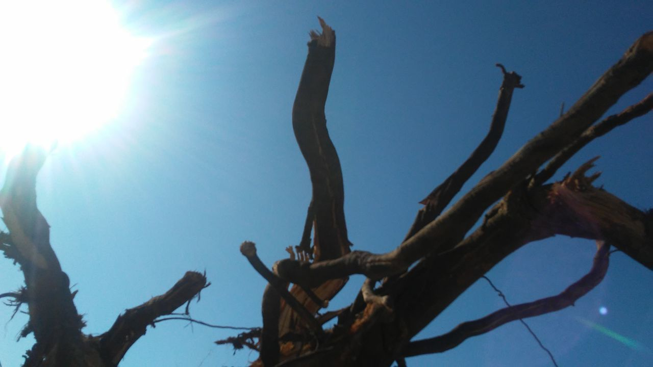 low angle view, branch, no people, nature, tree, day, outdoors, beauty in nature, clear sky, close-up, dead tree, sky