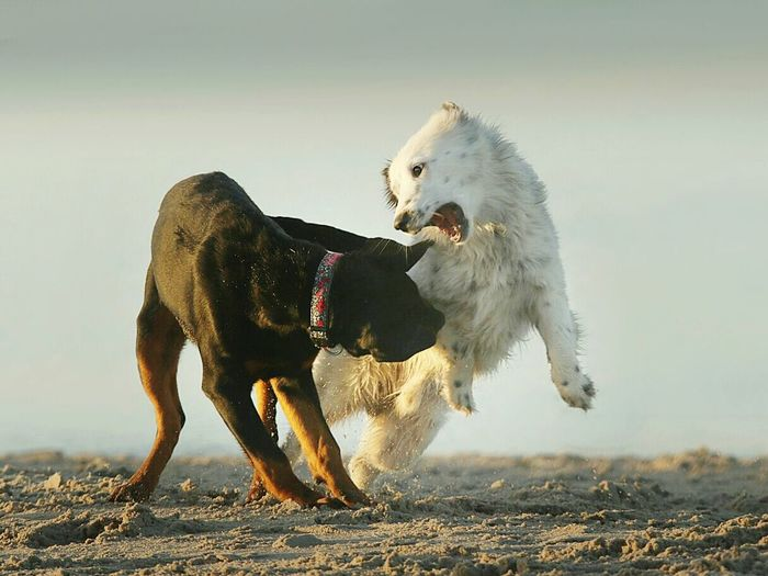 View of dogs fighting
