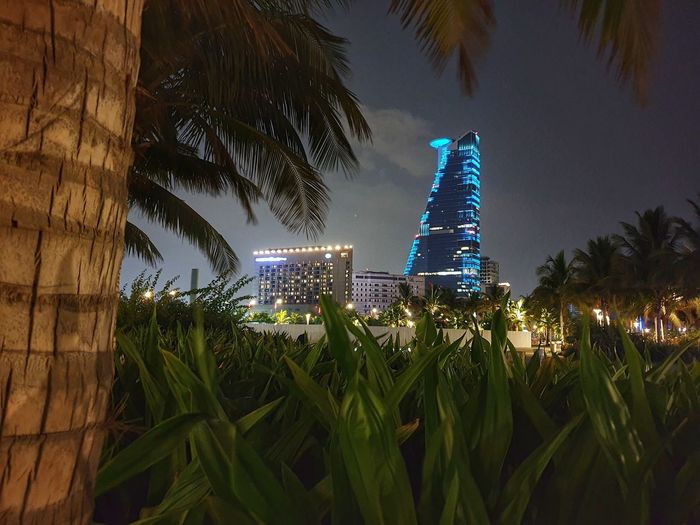 Palm trees and modern buildings against sky at night