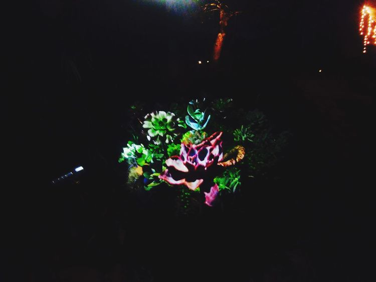 The City Light Flower Nature Growth Fragility Beauty In Nature Plant Petal Night No People Freshness Leaf Flower Head Outdoors