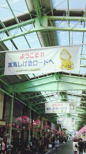 【Tottori,Japan】S