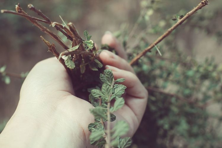 Human Hand Human Body Part One Person Holding Nature VSCO The Minimals (less Edit Juxt Photography)