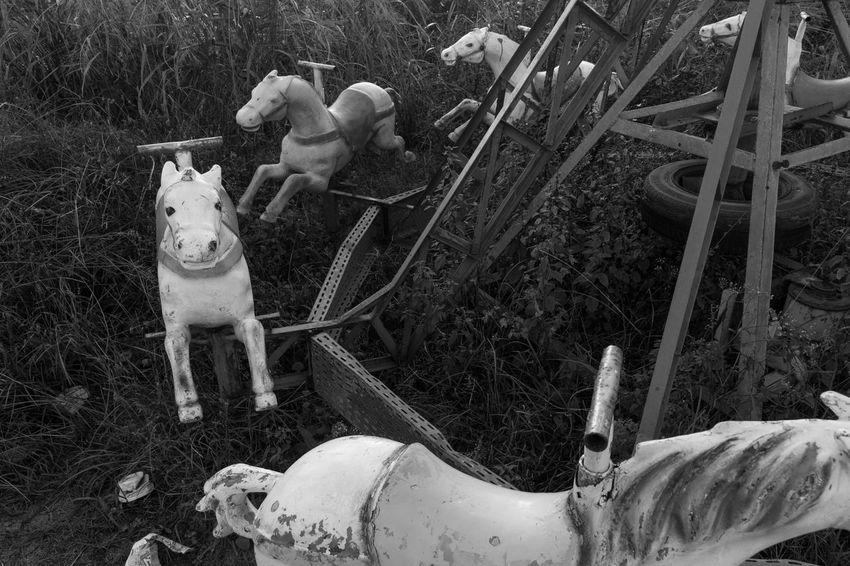 Abandoned Amusement Park Animal Themes Carousel Carousel Horse Day Dog Julhofragaphotography Nature No People Outdoors