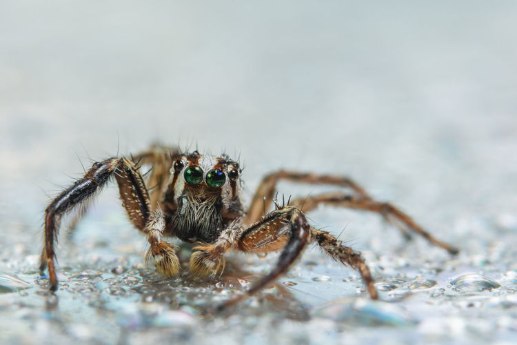 Close-Up Of Jumping Spider On Wet Land