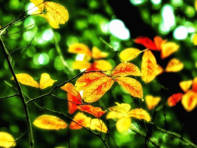 Nature Growth No People Green Color Beauty In Nature Yellow Close-up Leaf Full Frame Shot Low Angle View Tree Backgrounds Wilderness Detail My Secret Garden Bokeh Lights Tranquil Scene EyeEm Nature Lover EyeEm Best Shots Artistic Expression My Unique Style Exceptional Photography EyeEm Gallery Getting Inspired Multi Colored