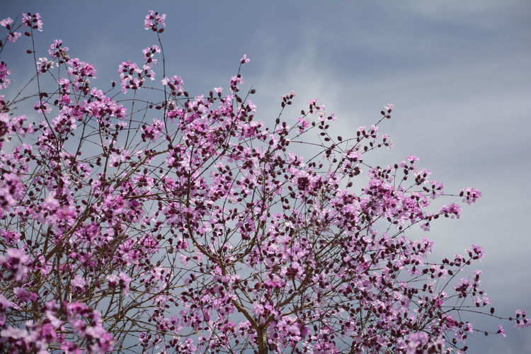 High Section Of Flower Trees Against The Sky