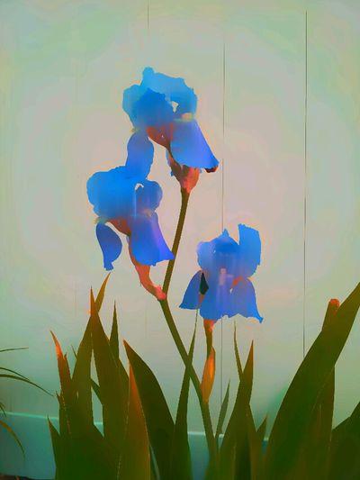 August in Blue: Cheers! Edits For Friends Flowers EyeEm Best Edits Edit