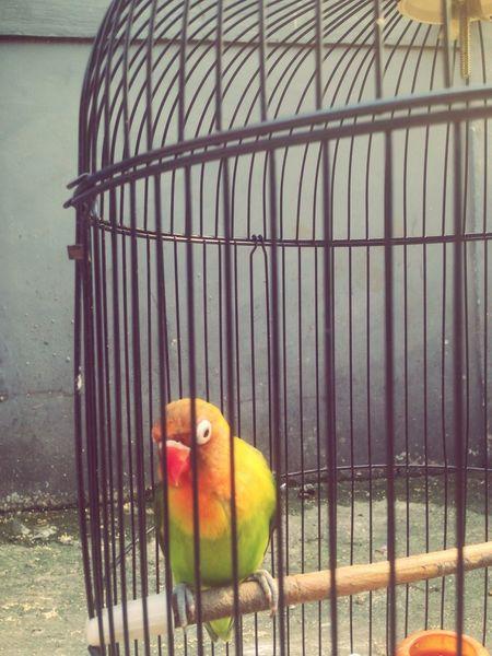 😍😉😘 Bird Close-up Lovely Bird