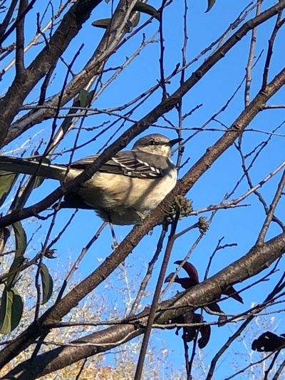 Bird Branch Tree Low Angle View Animals In The Wild Animal Themes Perching EyeEmNewHere
