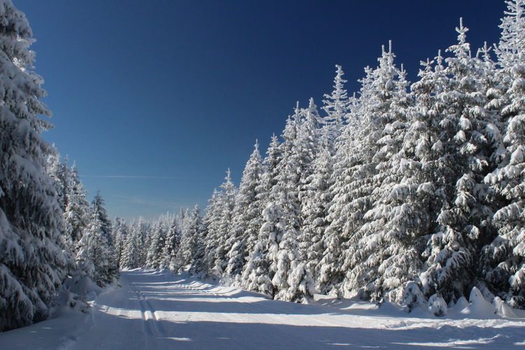 winter impressions of Nationalpark Harz Cold Temperature Snow Winter Nature Harz Brocken Trees Barks Of A Tree Tree Plant Sky Scenics - Nature Beauty In Nature Tranquil Scene Environment No People Landscape Tranquility Frozen White Color Clear Sky Pine Tree Evergreen Tree Coniferous Tree Fir Tree