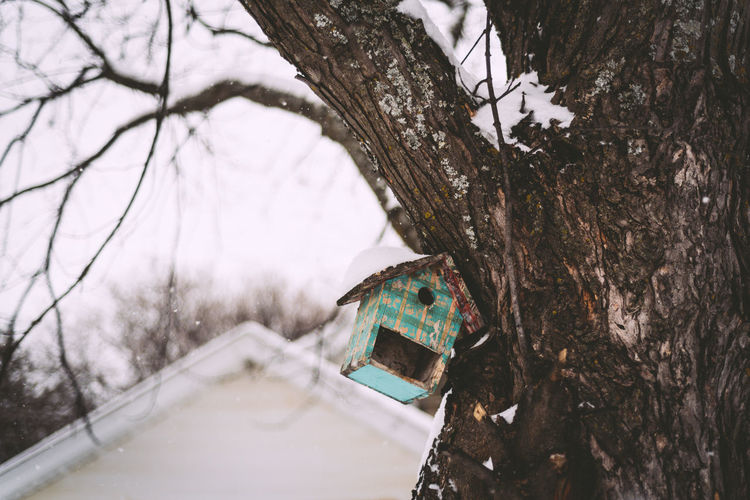 Low angle view of birdhouse on tree during winter